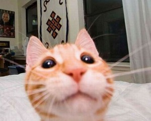 cats-taking-selfies-20