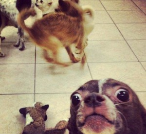 hilarious-animal-photobombs-1