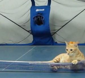 Tämä kissa pelaa paremmin pingistä kuin sinä – Katso video