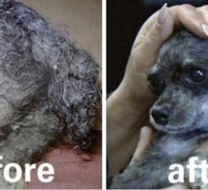 rescue-dogs-faces-before-and-after-getting-their-hair-cut-15-photos-5