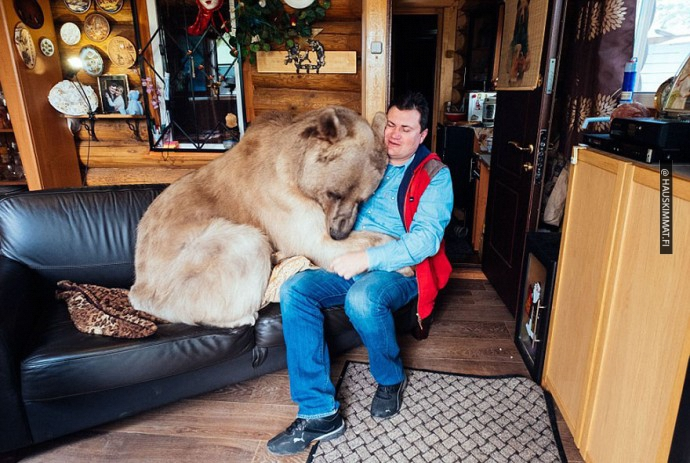 russian-couple-lives-with-adopted-bear-07