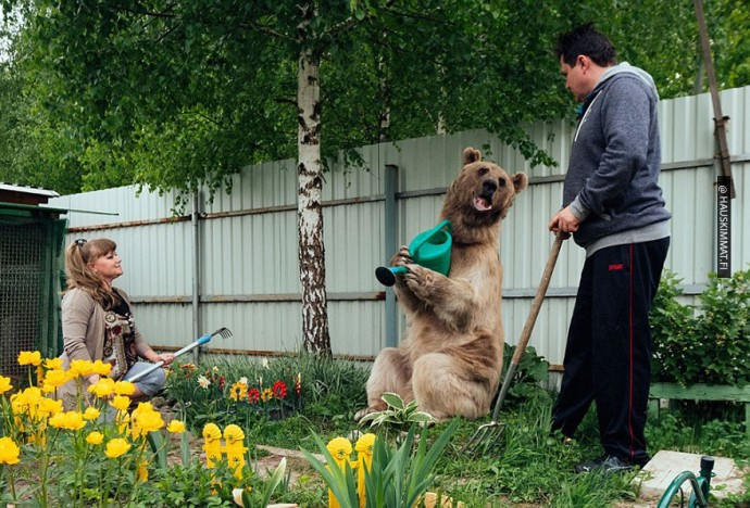 russian-couple-lives-with-adopted-bear-10