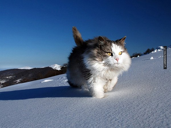these-gps-maps-show-us-how-active-cats-really-are-photos-9