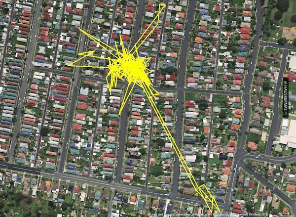 these-gps-maps-show-us-why-cats-are-so-lazy-during-the-day-photos-7