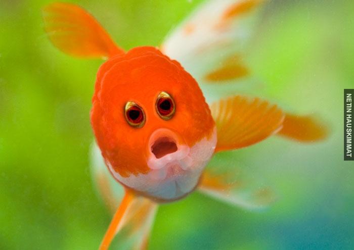 funny-animals-with-front-eyes-100-57da546e5459e__700