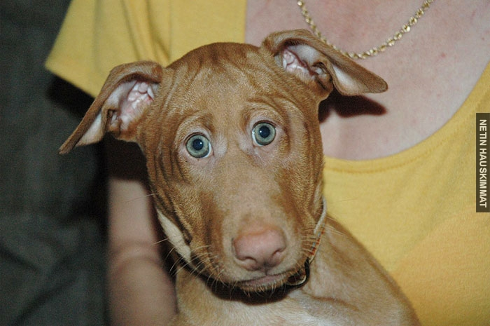 funny-animals-with-front-eyes-14-57da5be31a9d9__700