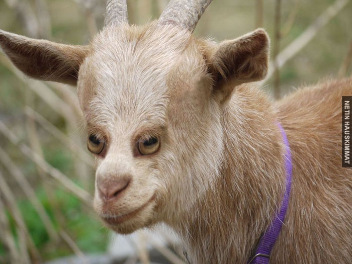 funny-animals-with-front-eyes-4-57da51bd63333__700