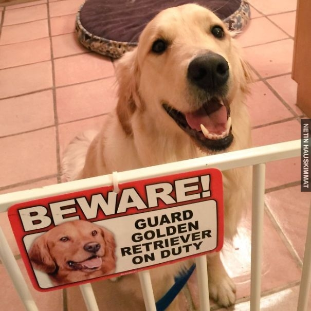 24-vicious-dogs-that-make-the-beware-of-dog-sign-totally-useless-02