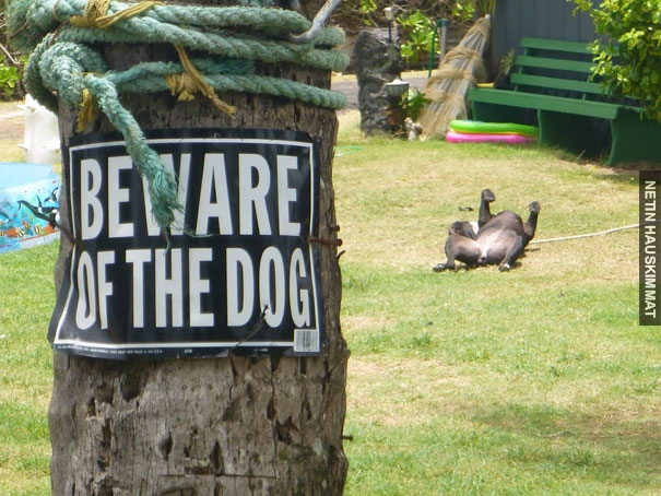 24-vicious-dogs-that-make-the-beware-of-dog-sign-totally-useless-08