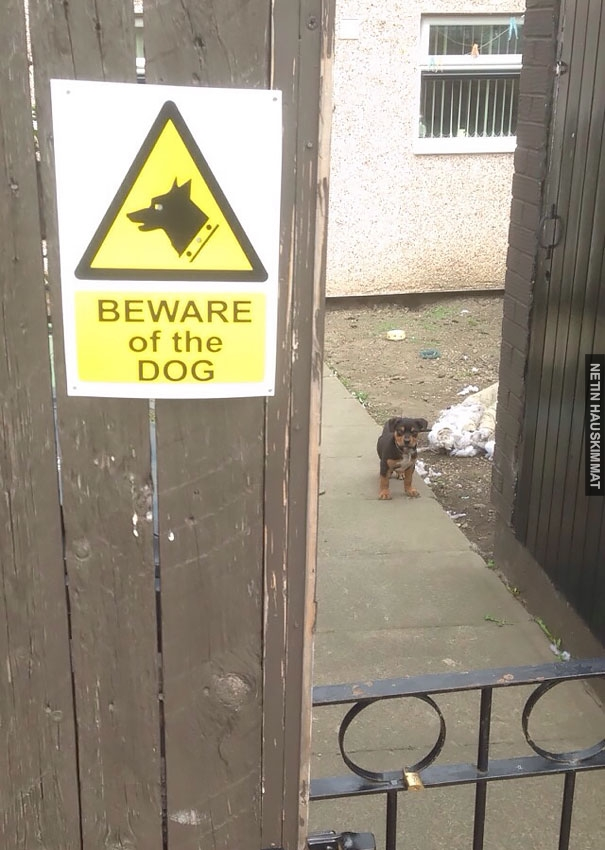24-vicious-dogs-that-make-the-beware-of-dog-sign-totally-useless-09