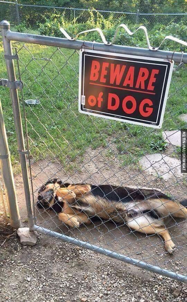 24-vicious-dogs-that-make-the-beware-of-dog-sign-totally-useless-10