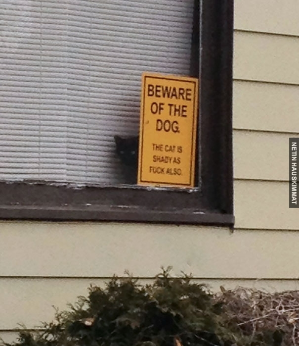 24-vicious-dogs-that-make-the-beware-of-dog-sign-totally-useless-11