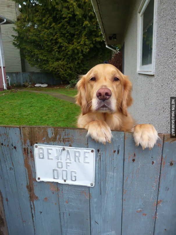 24-vicious-dogs-that-make-the-beware-of-dog-sign-totally-useless-12