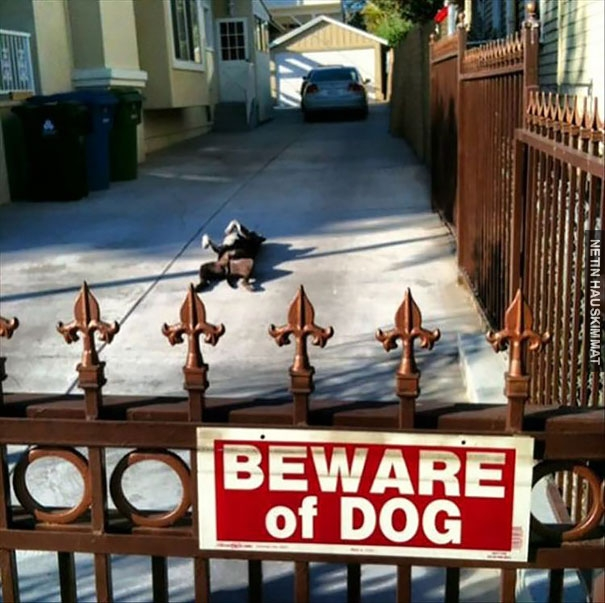 24-vicious-dogs-that-make-the-beware-of-dog-sign-totally-useless-13