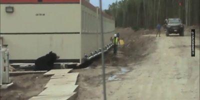 Karhupukuun pukeutunut mies aiheutti työkaverilleen paskahalvauksen! – Katso hauska video