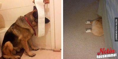 19 koiraa jotka luulivat löytäneensä täydellisen piilopaikan!