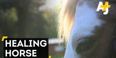 Bari -hevonen auttaa ihmisiä parantumaan – katso sydäntälämmittävä video!