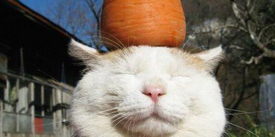 Kissat, joiden päällä on eri tuotteita – ei näytä häiritsevän