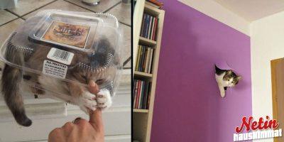 Eihän maailma olisi mitään ilman kissoja – Nämä kuvat todistavat sen!