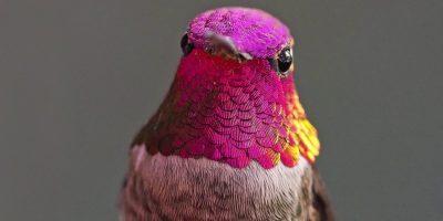Kolibrikuiskaaja! Tämän naisen toimiston ulkopuolella asuu 200 kolibria.