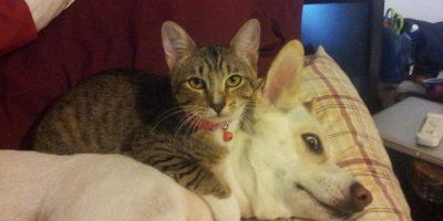 Kissat ja koirat kämppiksinä! – Katso hauskat kuvat!