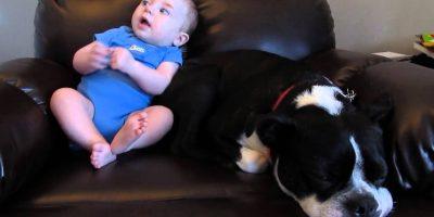 Vauva kakkaa vaippaansa yllättäen – katso koiran hulvaton reaktio!