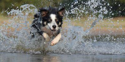Uusi maailmanennätys syntyi – lähes 600 koiraa samassa puistossa