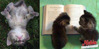 Onko huono päivä? – Nämä ihastuttavat kuvat kissoista pelastavat päiväsi!