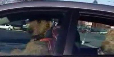 Koirat kävivät kärsimättömiksi odottaessaan autossa – katso niiden nerokas keksintö!