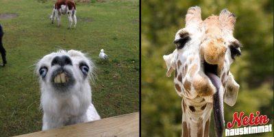 Kaikki eivät onnistu valokuvissa – Eivät edes eläimet!