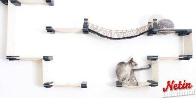 Onko kissallasi jo Indiana Jones-silta? – Se on ihan must!