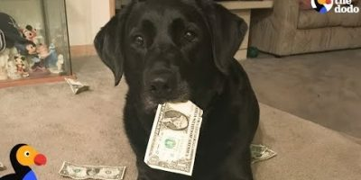 Koira varastaa perheen rahoja – ja maksaa niillä herkuista.