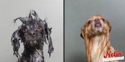 Rakastaako koirasi kylpemistä? – Katso 11 ihastuttavaa kuvaa!