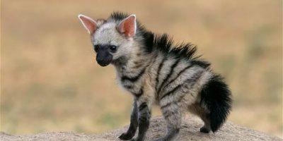 Tässä on maailman suloisin eläin! Tiedätkö, mikä se on?