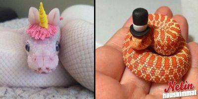 Nämä iloiset käärmeveijarit auttavat sinua voittamaan käärmekammosi!