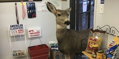 Peura käveli kauppaan sisään – palasi myöhemmin kavereidensa kanssa!