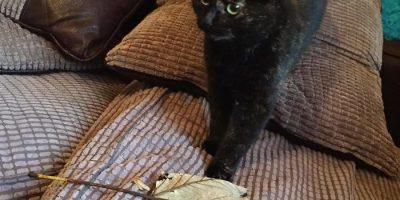 Kissa tajuaa, että sen isäntä ei pidä elävistä yllätyksistä – alkoi tuomaan lehtiä kotiin joka aamu!