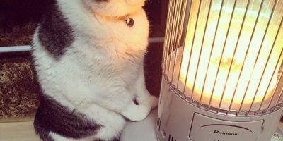 Kylmät kelit saivat kissan palvomaan lämmitintä – 7 huvittavan suloista kuvaa