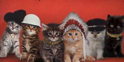 Ikonisia levynkansia, joita tähdittävät kissat – tällaista tällä kertaa