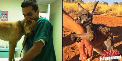 Suloiset eläimet jotka kiittivät pelastajiaan! – Katso hellyttävät kuvat!