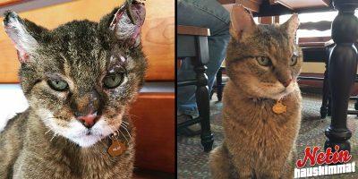 10 vuotta sitten kadonnut kissa löysi takaisin kotiin!