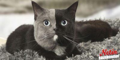 Miksi tämä kissa on niin ainutlaatuinen? – Katso kuvat ja ota selvää!