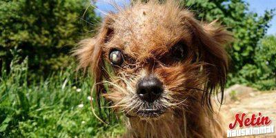 Frodo koiran suuremmoinen muodonmuutos! – Katso upeat kuvat!