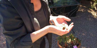 Nainen piti mehiläistä lemmikkinään pelastettuaan sen elämän – ainutlaatuinen ystävyys!