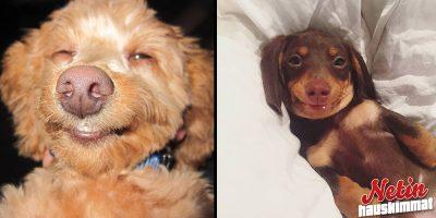 Nämä ihastuttavat hymyilevät koirat pelastavat päiväsi! – Söpöysvaroitus!