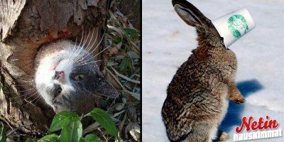 Nämä eläimet ovat jääneet jumiin! – Katso hassu kuvasarja!