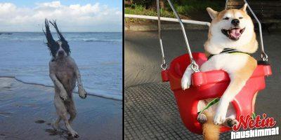 Tämä hilpeä kuvasarja todistaa että lemmikit tuovat paljon iloa elämään!