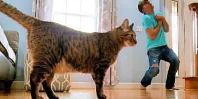 Omistaja esittää kuolevansa kissansa edessä. Katso, miten hassu kissa reagoi!