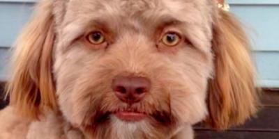 1-vuotiaan koiran kasvot näyttävät aivan ihmiskasvojen faceswapilta – oletko samaa mieltä?