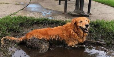 Mikäli olet koiranomistaja, tiedät tarkalleen, että seuraavat kuvat pitävät paikkansa